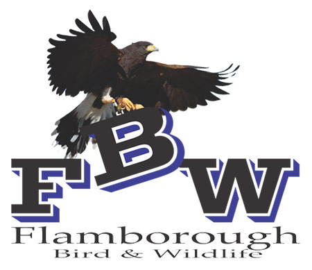 Flamborough Bird and Wildlife